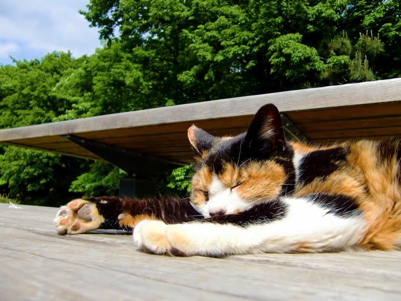 猫が気持ちよく寝ている様子